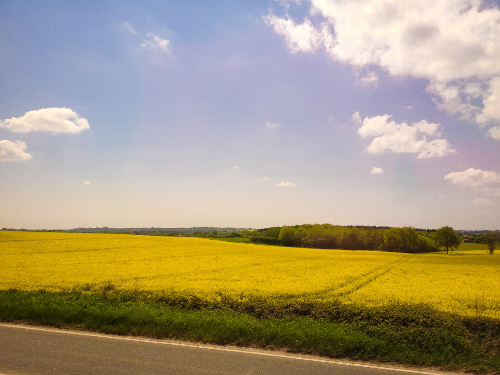 On our drive to Dover, Fields of Gold.